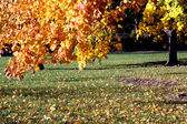 A park at autumn — Stock Photo