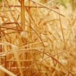 Close up background texture of dry grass — Stock Photo