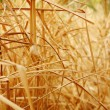 Close up background texture of dry grass - Stock Photo