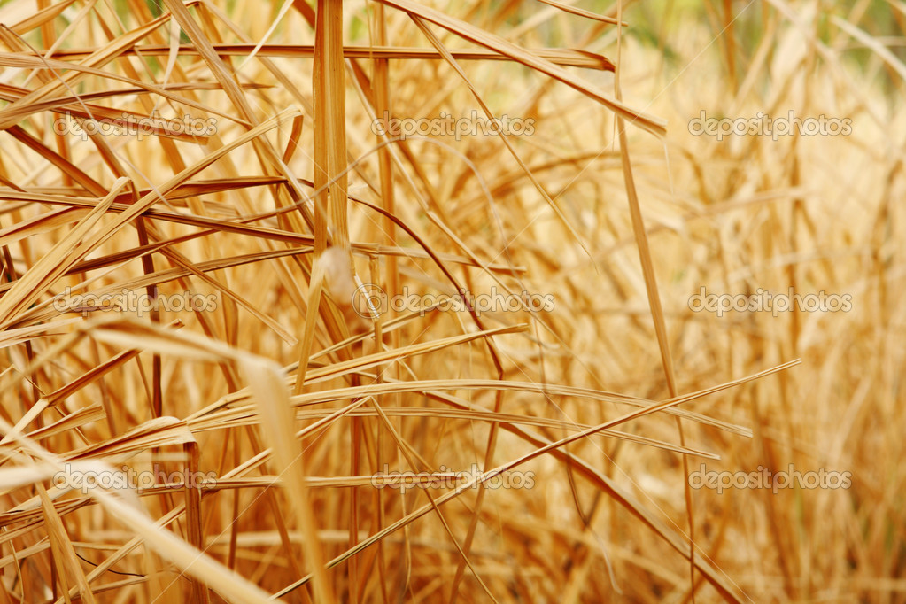 Close up background texture of dry grass  — Stock Photo #5105837