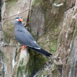 Inca Tern — Stock Photo #5036447