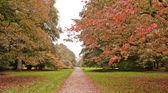 Trees in the Autumn — Stock Photo