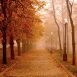 Autumn Mist — Stock Photo