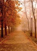 Autumn Mist — Stock Photo