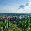 Stock Photo: Vineyard and residential district in Stuttgart city center.