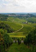 Vineyard in the fall of Stuttgart, Germany — Stock Photo