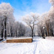 Stock Photo: Beautiful frozen trees in park Donetsk.