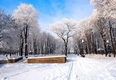 Beautiful frozen trees in the park Donetsk. — Stock Photo