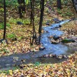Creek in autumn forest — Stock Photo