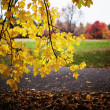 Autumn in the park — Stock Photo #4155209