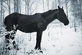 At kış orman içinde — Stok fotoğraf