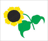 Background. A flower. A blossoming sunflower with sunflower seed — Stock Vector