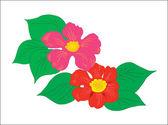 Květinové pozadí. dvě krásné květy s listy — Stock vektor