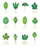 Tree leafs and nature icons — Stock Vector