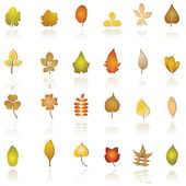 Autumn leaf background and icons — Stock Vector