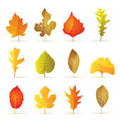 Different kinds of tree autumn leaf icons — Stock Vector