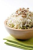 Mungo fazole a čočka klíčky — Stock fotografie