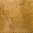 Honeycomb — Foto de stock #5289852