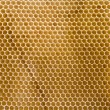 Stockfoto: Honeycomb