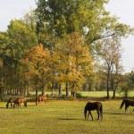 Horses grazing — Stock Photo #5361710
