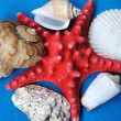 The Starfish and seashells. — Stock Photo