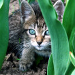 The Kitty on flowerbed. — Stock Photo