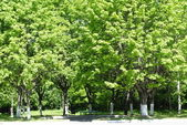 A árvore no dia solar brilhante. — Foto Stock