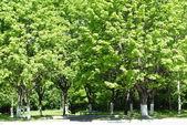 El árbol en el luminoso día solar. — Foto de Stock