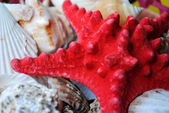 The Starfish and seashells. — Stock Photo