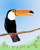 Toco toucan — Stock Vector