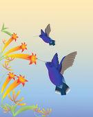 Hummingbirds — Stock Vector