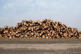 Sawn larch logs — Stock Photo