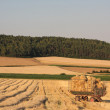 Harvested field — Stock Photo #4297351