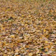 Yellow autumn sheet of a tree against leaves — Stock Photo