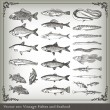 Vector set: fish background — Stock Vector #4097028