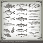 Vector set: fish background — Stock Vector