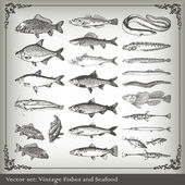 Vector set: fish background — Stok Vektör