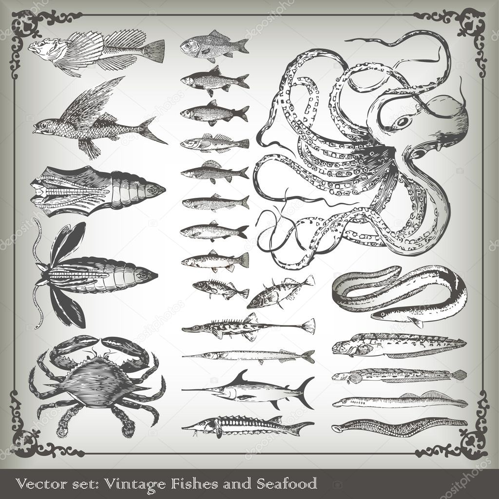 Vector set: fish background for poster — Stock Vector #4097008