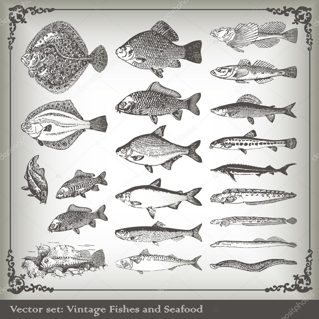 Vector set: fish background for poster — Stock Vector #4097035