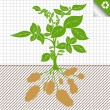 Potato plant bush vector concept background — Imagen vectorial