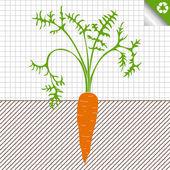 Carrot vector background — Stock Vector