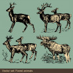 Forest animal vectors — Stock Vector
