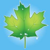 Green leaf vector — Stock Vector