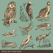 Forest bird vectors — Stock Vector