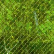 图库照片: Blur green wood behind grid.