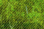 Blur green wood behind the grid. — Stock Photo