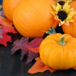 Pumpkins, daisies and fall leaves. — Stock Photo