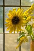 Sunflower in sunlit window — Stock Photo