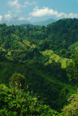 Lush Hillside in Colombia — Stock Photo