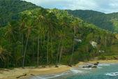 Palmtrees in Tayrona — Stock Photo